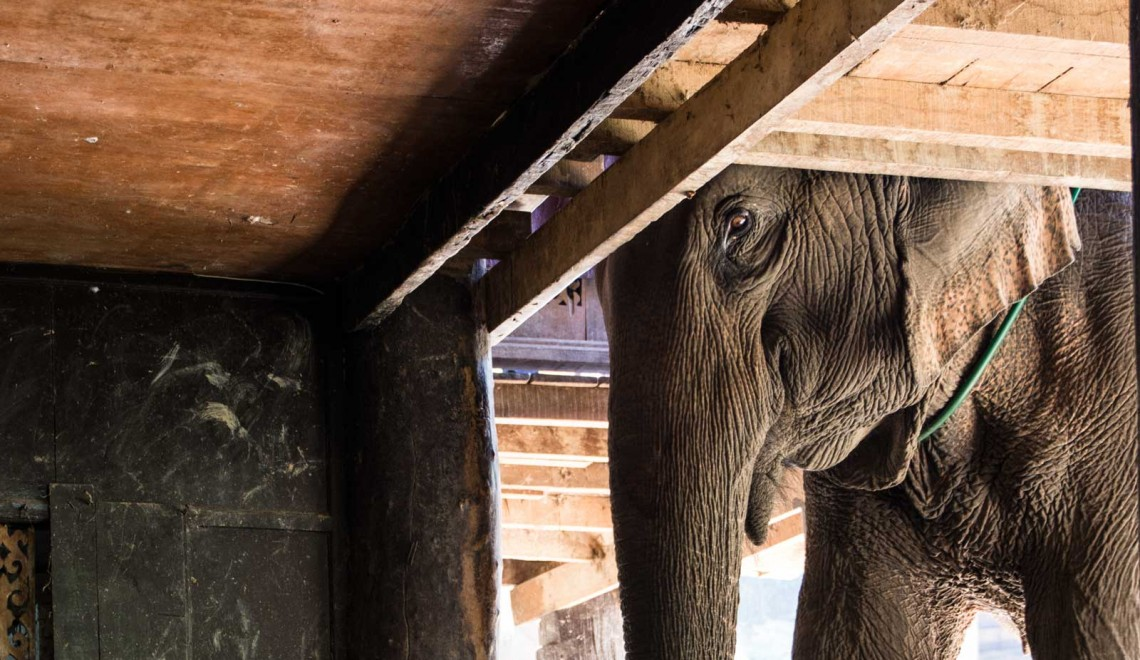 Incontro con gli elefanti in Thailandia, turismo responsabile