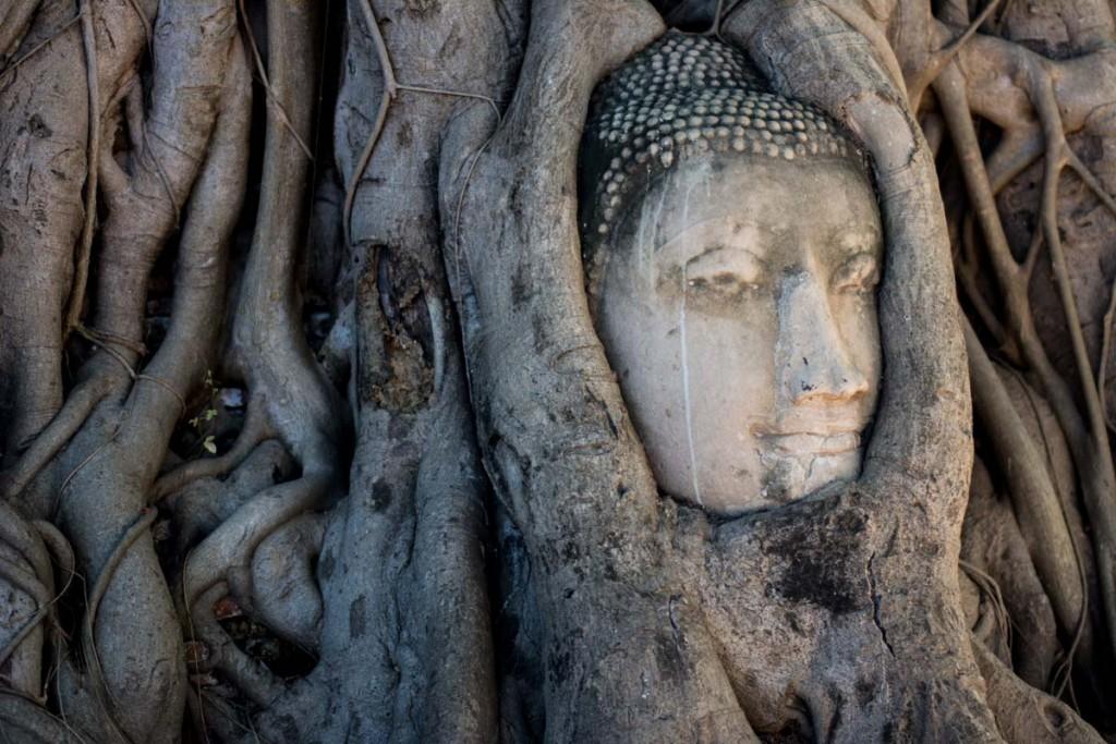 testa-buddha