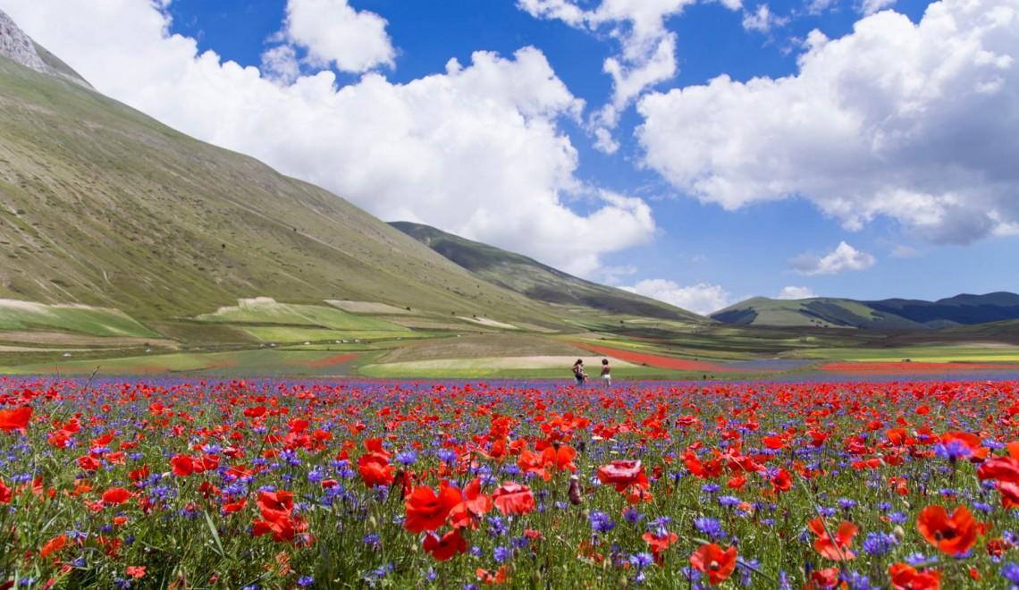 Castelluccio di Norcia e la sua incantevole fioritura