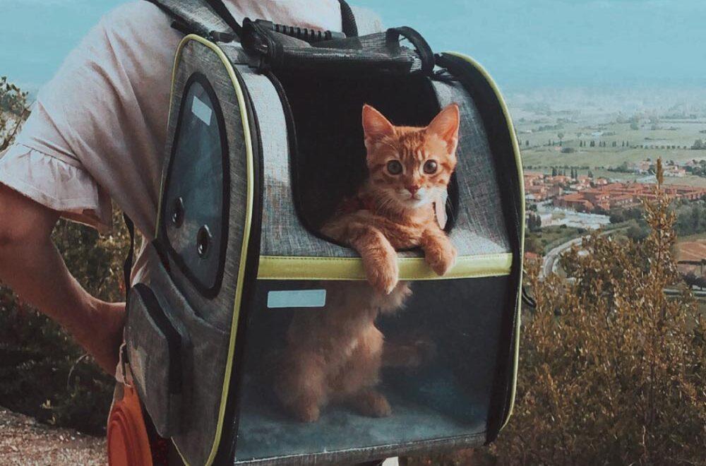 Zaino per gatti: il trasportino preferito da Antonino